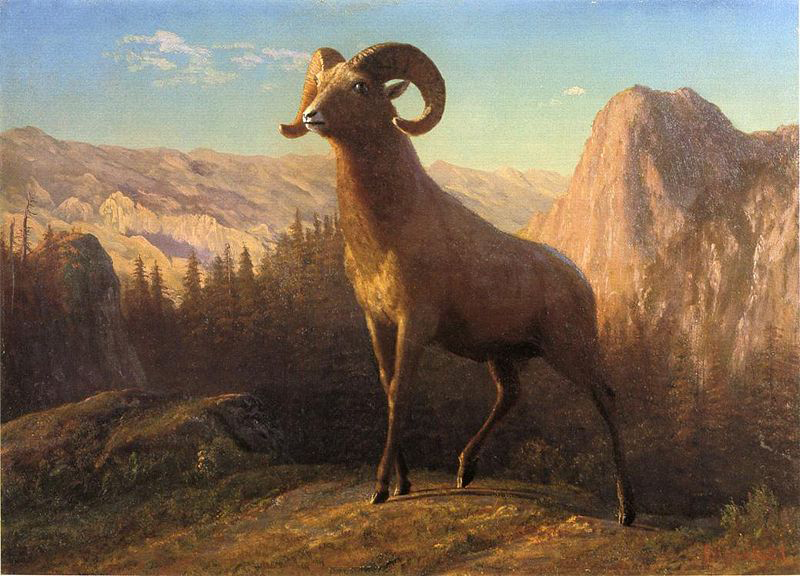 Albert Bierstadt A Rocky Mountain Sheep, Ovis, Montana