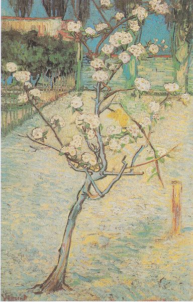 Vincent Van Gogh Flowering Pear-Tree