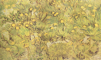 Vincent Van Gogh A Field of Yellow Flowers (nn04)