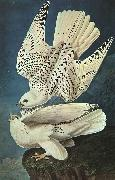John James Audubon White Gerfalcons Sweden oil painting reproduction