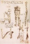 LEONARDO da Vinci, Anatomical studies of the basin of the Steibeins and the lower Gliedmaben of a woman and study of the rotation of the arms