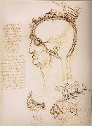 LEONARDO da Vinci, Anatomical study of the brain and the scalp