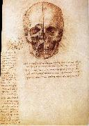 LEONARDO da Vinci, Anatomy of the Schadels