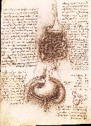 LEONARDO da Vinci, Anatomical drawing of the stomach and the intestine