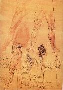 LEONARDO da Vinci, Muscles and bone of leg and Hufte