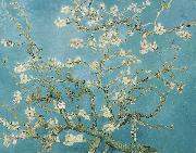 Vincent Van Gogh, Almond Blossoms