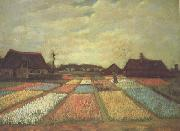 Vincent Van Gogh, Bulb Fields (nn04)