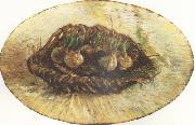 Vincent Van Gogh, Basket of Sprouting Bulbs (nn04)